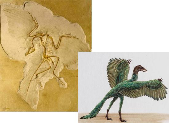 external image archaeopteryx.jpg